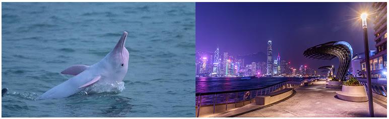 【港粵菁華五日】港珠大橋、大澳白海豚、滿漢全席香格里拉五日-PAK