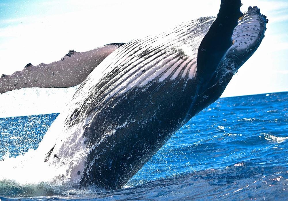 【沖繩】NEWS賞鯨之旅