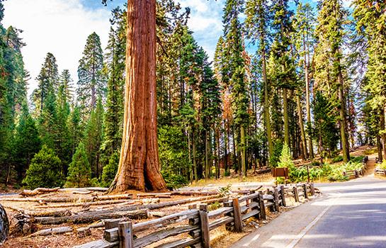 3日 舊金山, 優山美地, 國王峽谷, 美洲紅杉國家公園