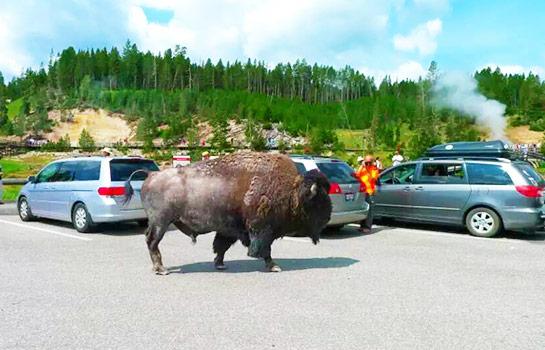 10日 拉斯維加斯, 羚羊彩穴, 包偉湖, 錫安公園, 布萊斯峽谷, 大峽谷西緣, 黃石公園, 大提頓