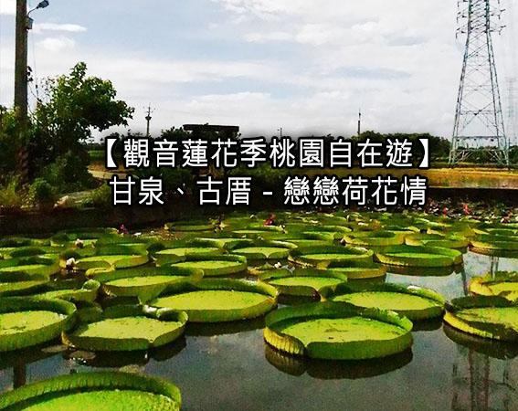 【觀音蓮花季桃園自在遊】甘泉、古厝 - 戀戀荷花情