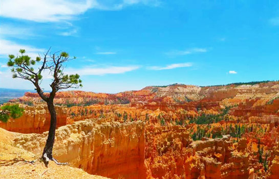 8 Days San Francisco, 17-Miles Drive. Las Vegas. Upper Antelope Canyon.  Zion National Park. Bryce Canyon. Lake Powell.  Grand Canyon West 8 Days Tour