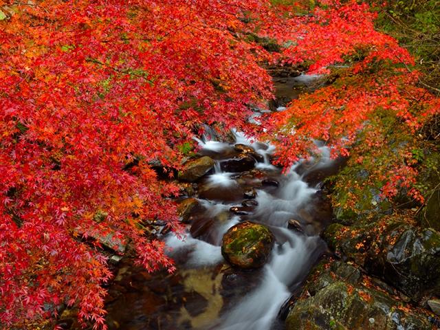 茨城祕境賞楓掃帚草採果之旅四日遊