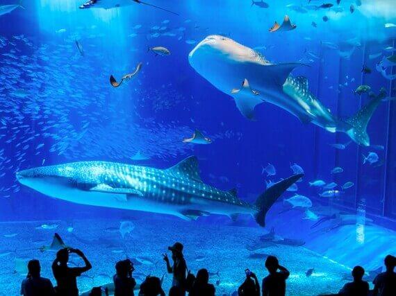 【票券】沖繩美麗海水族館門票
