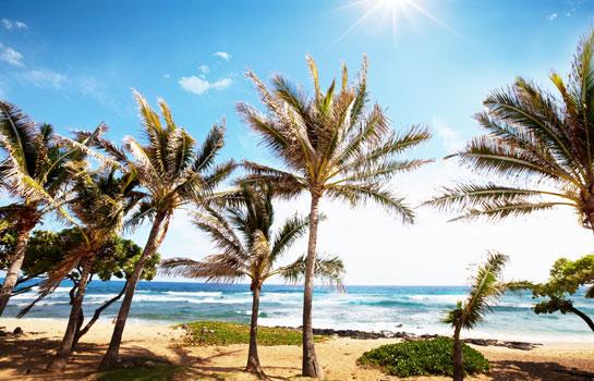 夏威夷5天4夜遊 (歐胡島、火山島或茂伊島兩島遊)