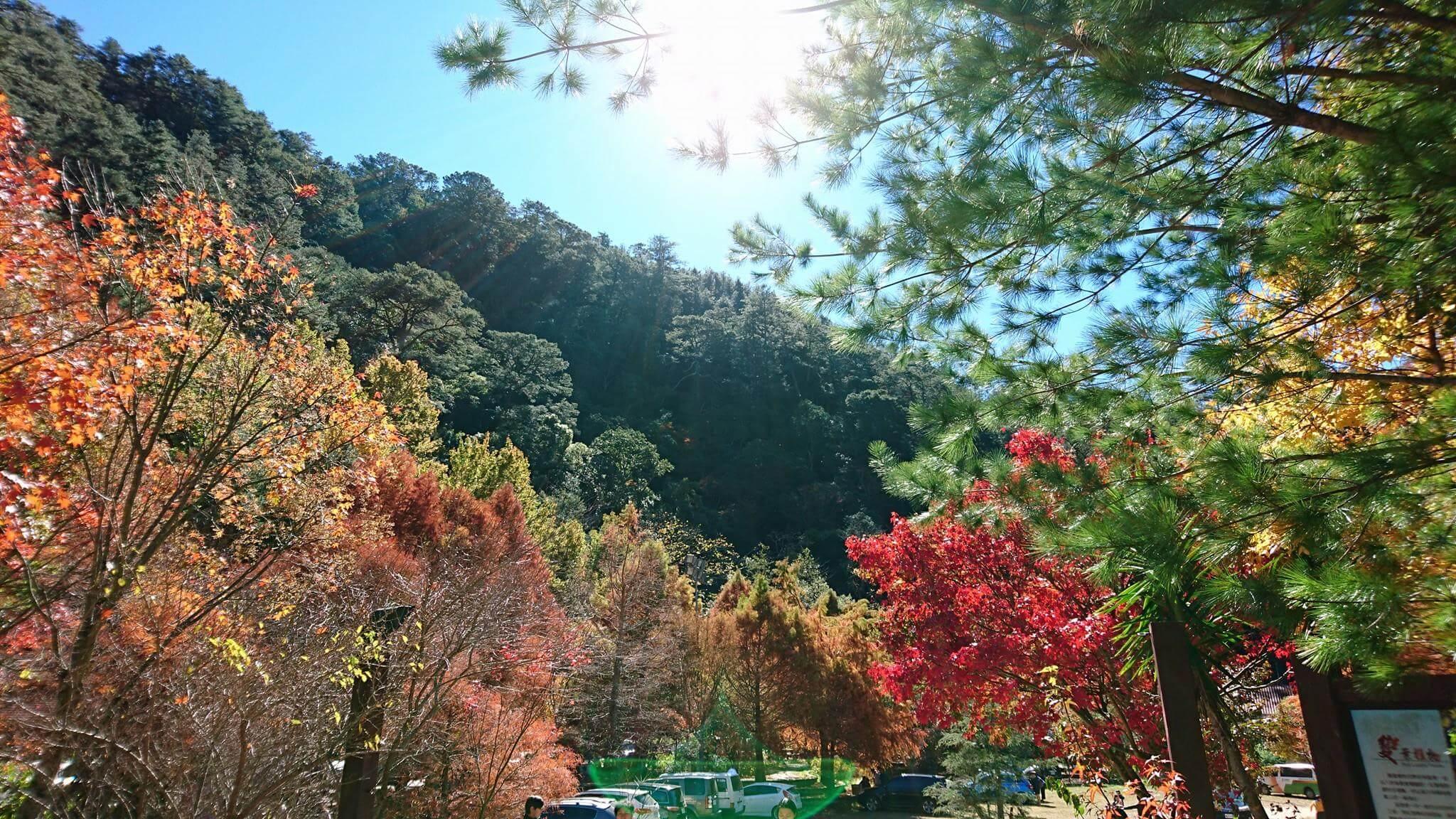 武陵農場雪霸春暖花開富野二日遊